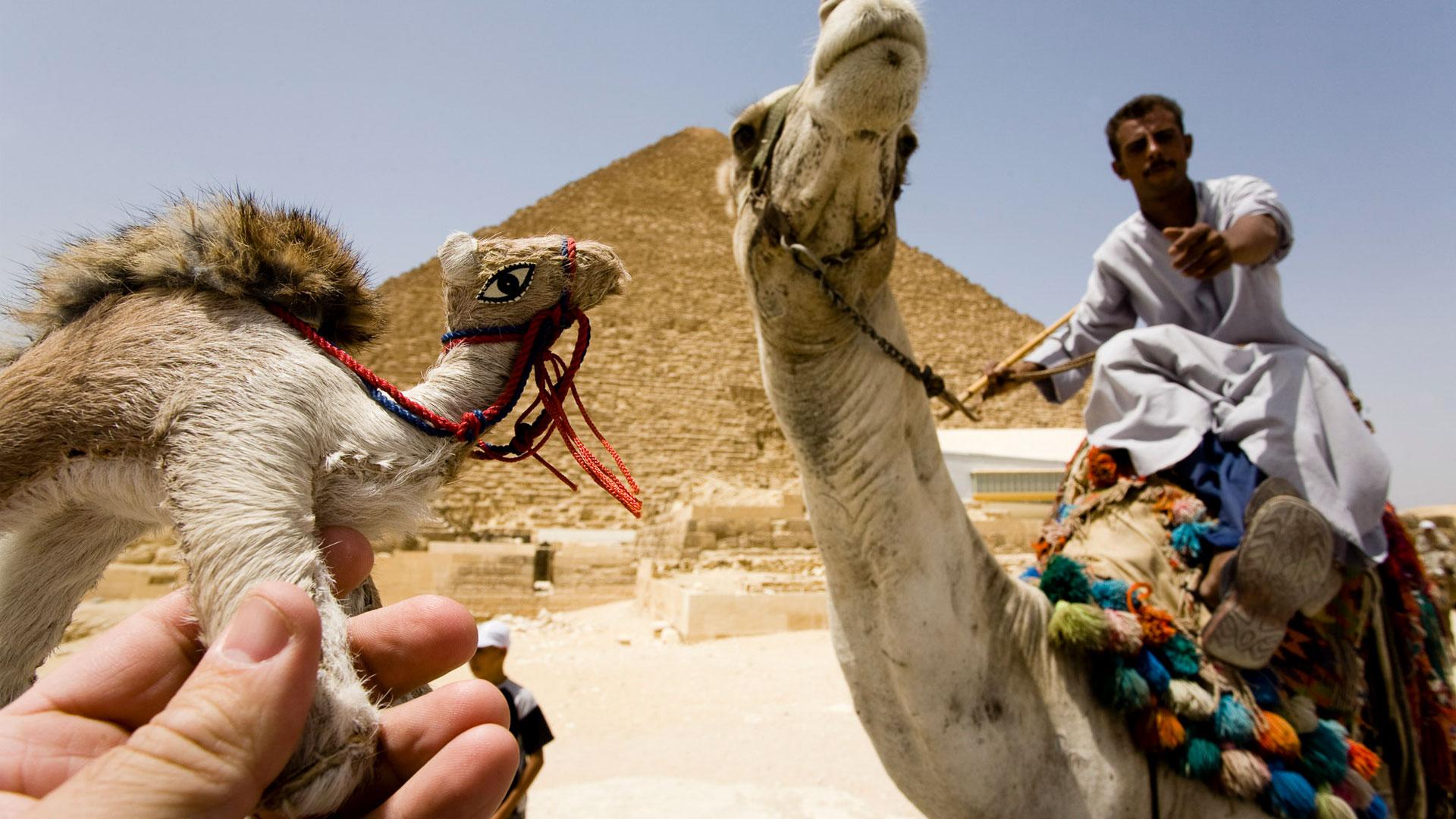 Смешные картинки из египта, открытки дню матери